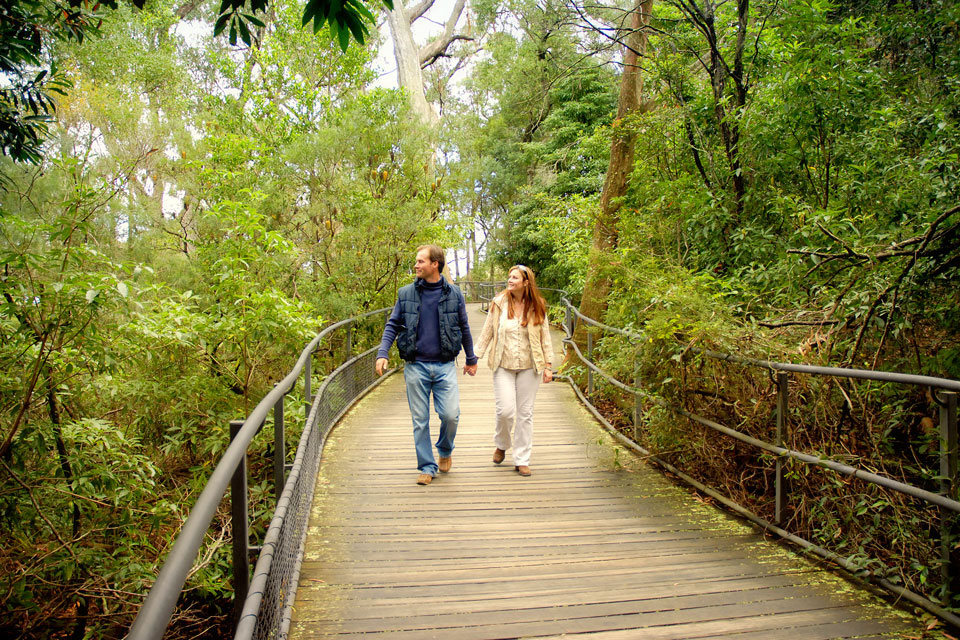 Walking tracks, hiking in National Park at Bowral, Southern Highlands